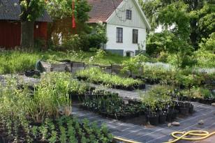 Linders-Plantskola-44738