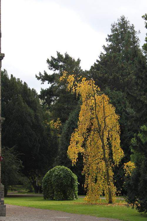 11-Linders-Plantskola-Li_63435_resize