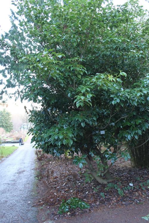 12-Linders-Plantskola-IMG_9854_resize