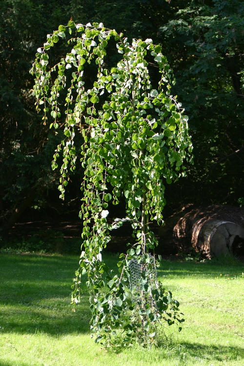 9-Linders-Plantskola-5623_resize