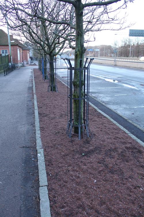 9-Sorbus-ullungii-Linders-Plantskola-IMG_9815_resize