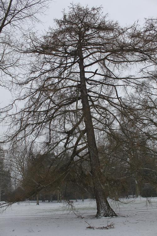 1-Linders-Plantskola-IMG_0897_resize