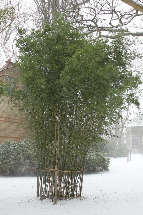 20-Linders-Plantskola-IMG_0988_resize