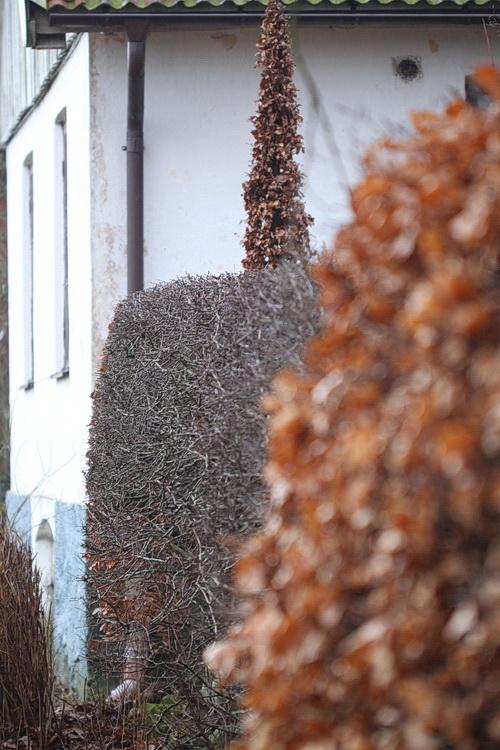 10-Linders-Plantskola-IMG_1156_resize