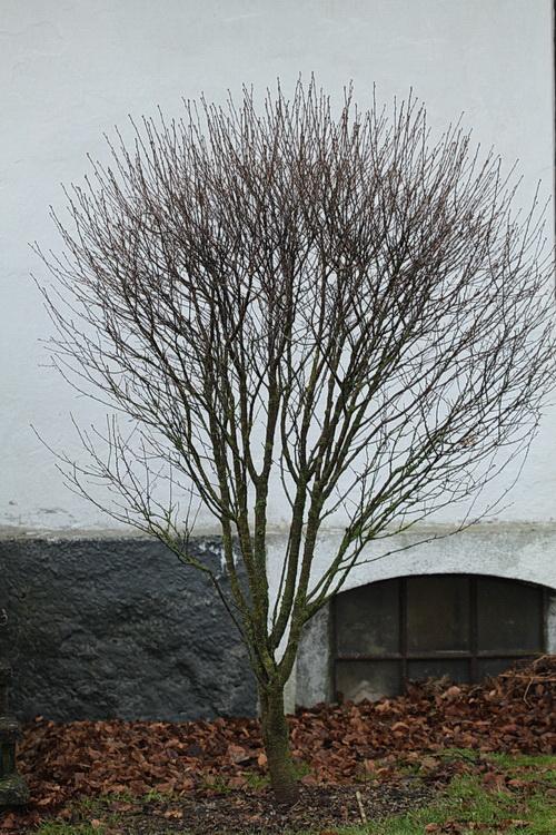 13-Linders-Plantskola-IMG_1162_resize