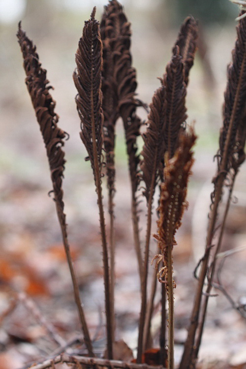 16-Linders-Plantskola-IMG_1141_resize