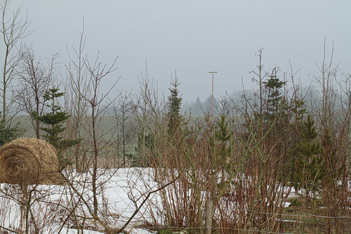 6-Linders-Plantskola-IMG_1082_resize