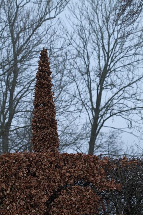9-Linders-Plantskola-IMG_1099_resize