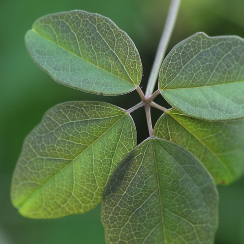 Linders_Plantskola_15_resize