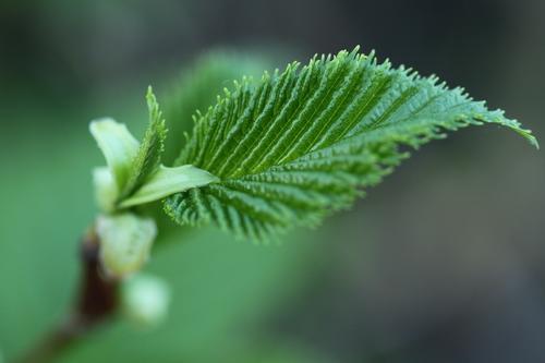 Linders_Plantskola_1_resize