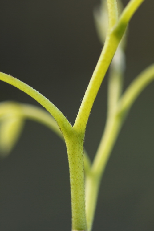 Linders_Plantskola_25_resize