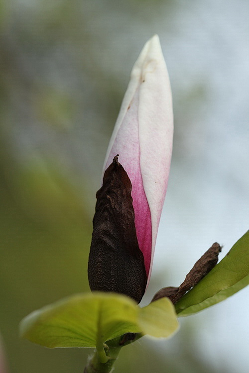 Linders Plantskola 2